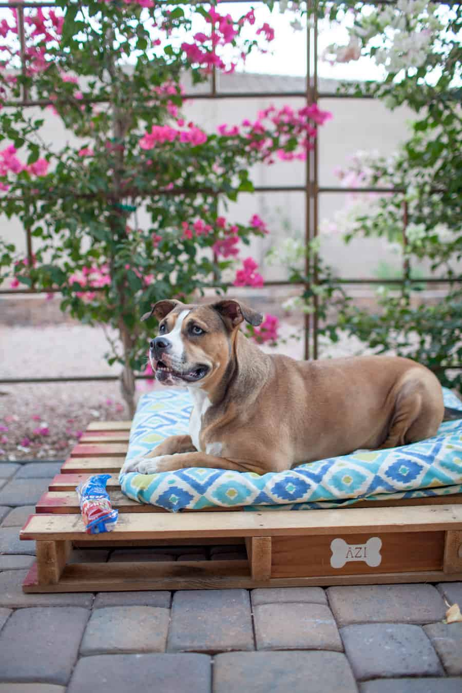 easy-diy-outdoor-dog-pallet-bed-2